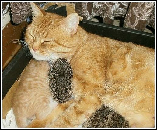 Josie et la chatte des chats dans l'espace
